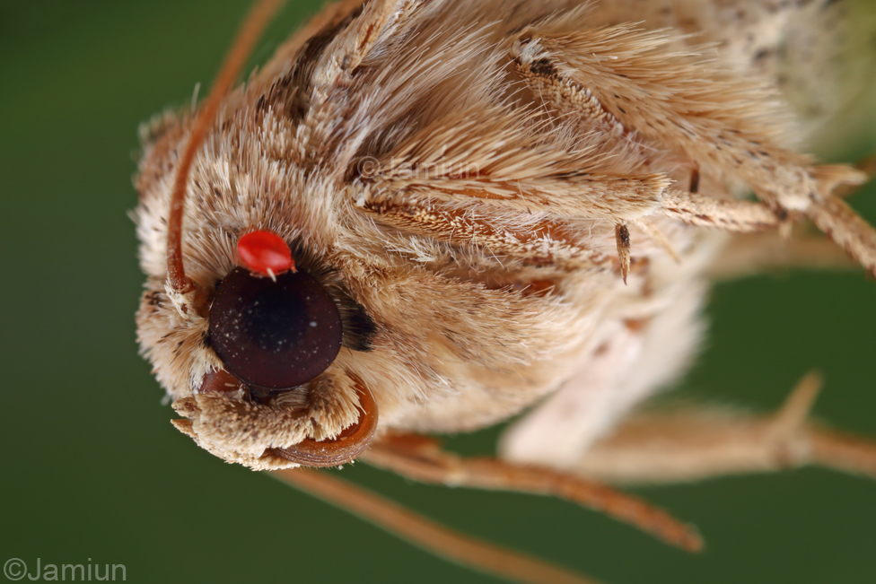 A moth and a mite on his/her eyes